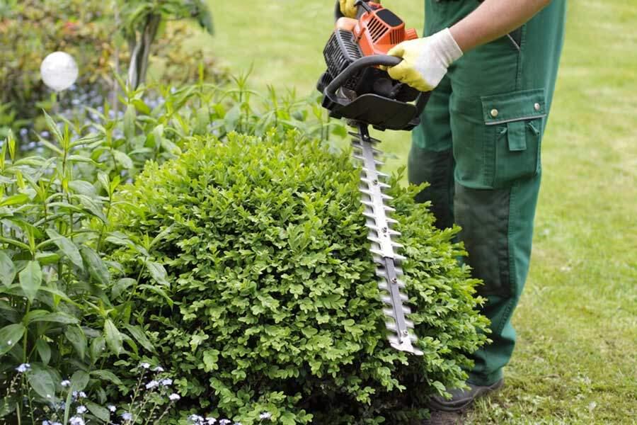 Gartenpflege, Baumfällung Und Baumheilende Maßnahmen Garten Anleitung Gartenpflege